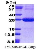 AR51137PU-N - NDUFV2
