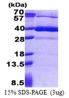 AR51144PU-N - HS3ST1 / 3OST