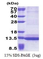 AR51156PU-N - Epigen