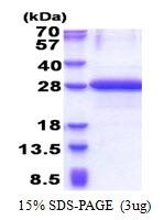 AR51177PU-N - OBFC2A