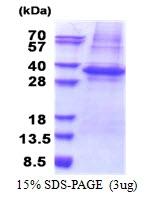 AR51206PU-N - PLSCR3