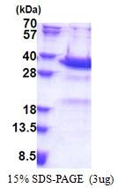 AR51211PU-N - Synaptotagmin-5