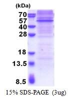 AR51226PU-N - RAPSN / RNF205