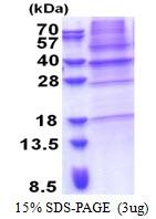 AR51227PU-N - LIME1