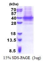 AR51228PU-N - PIH1D1