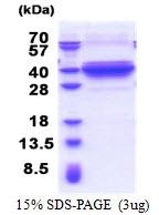 AR51231PU-N - DNALI1