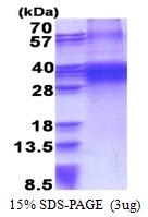AR51232PU-N - FHL3
