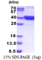 AR51243PU-N - CDK16 / PCTK1