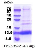 AR51249PU-N - MTCP1