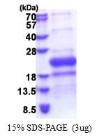 AR51263PU-N - TNFRSF14 / HVEM