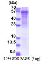 AR51279PU-N - Oleamide hydrolase 2