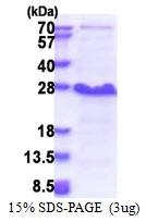 AR51288PU-N - NDFIP1