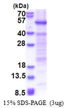 AR51295PU-N - HSFY1 / HSFY2