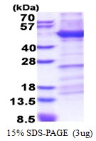 AR51304PU-N - CD29 / Integrin beta-1