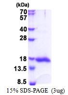 AR51313PU-N - Galectin-13