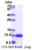 AR51331PU-N - CKS1B