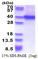 AR51342PU-N - RLBP1