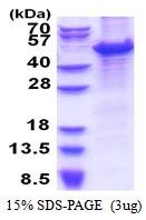 AR51344PU-N - MCM7