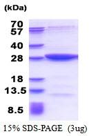 AR51346PU-N - MOBKL2B