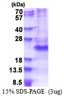 AR51350PU-N - CD162 / PSGL1