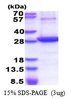 AR51352PU-N - CD73