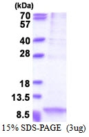 AR51374PU-N - Apolipoprotein C I (Apo CI)