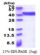 AR51388PU-N - PLEKHF2