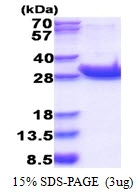 AR51397PU-N - CD45 / LCA