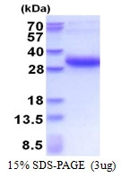 AR51402PU-N - Melanoregulin