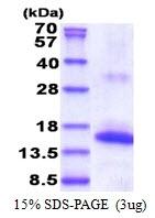 AR51403PU-N - CD337
