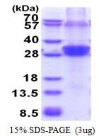 AR51421PU-N - RNF114