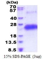 AR51435PU-N - CD40