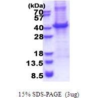 AR51459PU-N - CD5