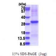 AR51484PU-N - KLK10 / Kallikrein-10