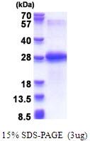 AR51500PU-N - Chondrolectin