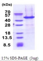 AR51520PU-N - NAIF1 / C9orf90