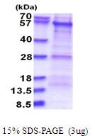 AR51521PU-N - PKNOX1