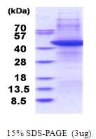 AR51522PU-N - TARBP2