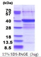 AR51530PU-N - PLCXD3