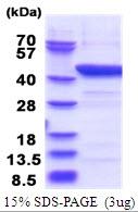 AR51531PU-N - IDO1 / INDO