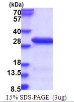 AR51534PU-N - RANBP3