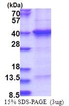 AR51537PU-N - THAP7