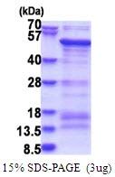 AR51545PU-N - SAMSN1
