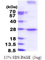 AR51577PU-N - CD273 / PDL2