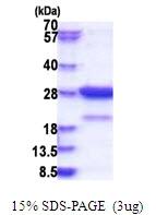 AR51599PU-N - STXBP6 / Amysin