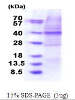AR51613PU-N - OSGEP / GCPL1