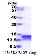 AR51634PU-N - CHCHD7