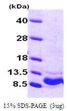 AR50026PU-N - CXCL1 / GRO-alpha