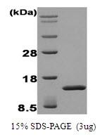 AR50006PU-N - FGF acidic / FGF1