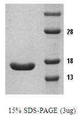SA6055 - Tumor necrosis factor (TNF-alpha)